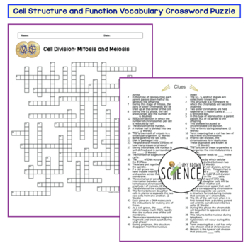 Cell Division Mitosis and Meiosis Crossword Puzzle by Amy