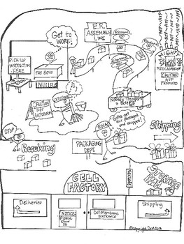 Cell Factory Analogy Biology Sketch Notes Doodle Notes by