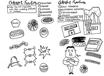 Cell Organelles Coloring sheet by Scientifically Speaking