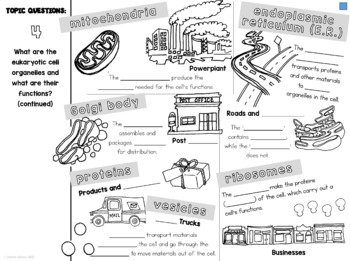 Cell Organelles Cornell Doodle Notes : Cell City Analogy
