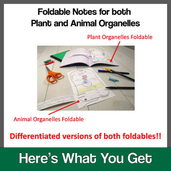 Cell Organelles Foldables: Exploring Plant & Animal Cell