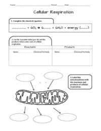Cell Respiration NGSS Scaffolded Worksheet by D Meister | TpT