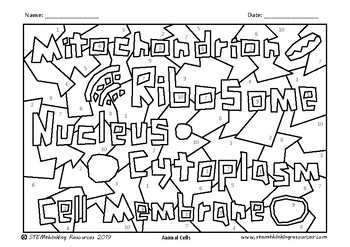 Cell Structures Coloring Pages Color by Number Biology