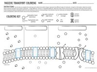 Cell Transport Worksheet