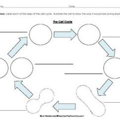 Mitosis Worksheet Diagram Honda Civic 1995 Radio Wiring Cells: Cell Cycle Flow Chart By Lori Maldonado | Tpt