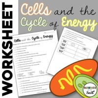 Cells and Energy Worksheet Review Photosynthesis and