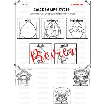 Chicken Life Cycle Activities for Kindergarten and First