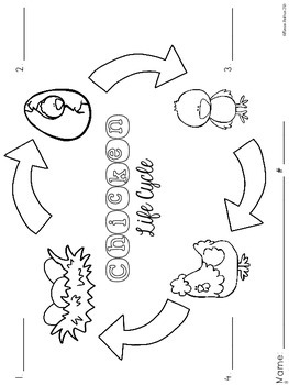 Chicken Life Cycle {Informational Text, Printables, Cut