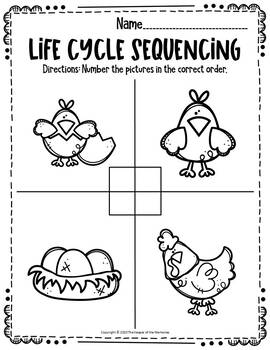 Chicken Life Cycle Printable Worksheets by The Keeper of