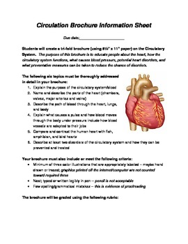Circulatory System Brochure By Amy Schulze Teachers Pay Teachers