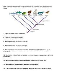 Cladograms Worksheet and Pr... by Brianna Jenkins ...