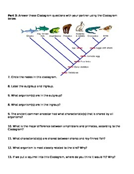 Cladograms Worksheet And Practice By Brianna Jenkins  Tpt
