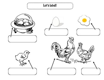 Close Reading ~ Hatching Baby Chicks: Expository Text