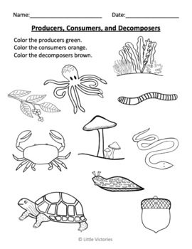 Color the Producers, Consumers, and Decomposers by Little