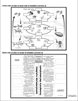 Complete and Incomplete Metamorphosis Foldable: Life