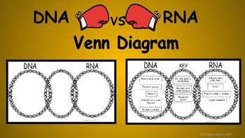 venn diagram comparing dna and rna telephone wiring vs teaching resources teachers pay