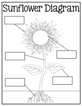Diary of a Sunflower- Observation Journal by Meghan Snable