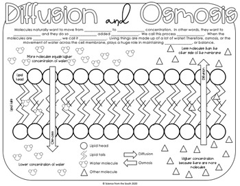 Diffusion and Osmosis Coloring Worksheet Includes 8