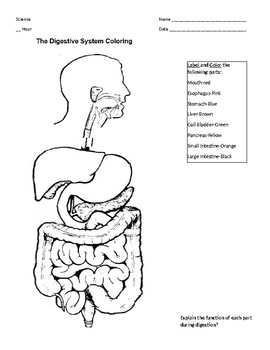 Digestive Tract Pages Coloring Pages
