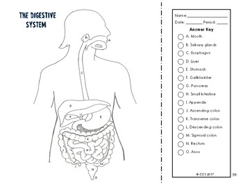 Digestive & Excretory System Coloring by The Science