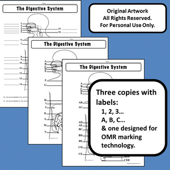 Digestive System Diagram Personal Use Only Anatomy and
