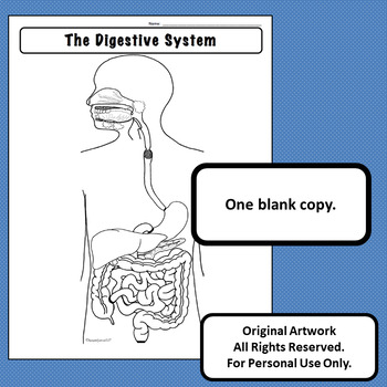Digestive System Diagram Personal Use Only Anatomy and ...