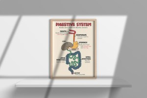 Digestive System Poster by Cool Middle School Posters   TpT