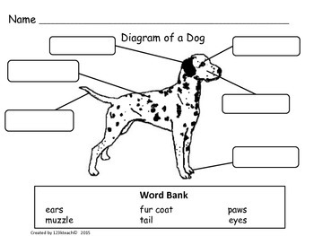 All About Dogs, Writing Activities, Graphic Organizers
