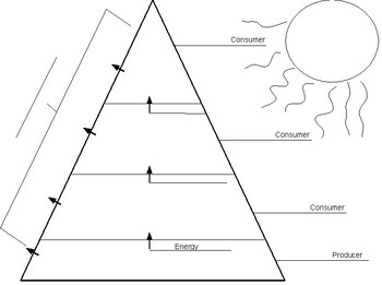 Ecological Pyramids Worksheet Answer Key
