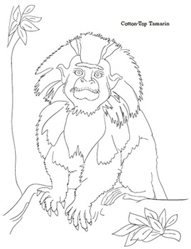 Endangered Species: Primate Coloring Sheets by Kid World