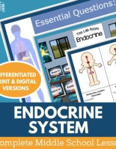 Endocrine system complete  lesson plan also by kesler science tpt rh teacherspayteachers