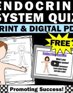 Free endocrine system human body systems th grade also teaching resources teachers pay rh teacherspayteachers