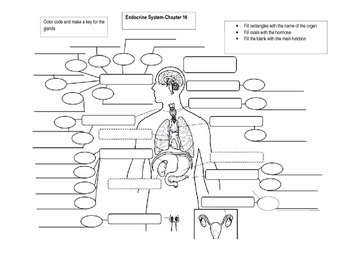 Endocrine System labeling and concept map by Bates Science