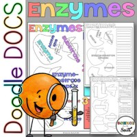 Enzymes Coloring Worksheets with 8 Differentiated Versions ...