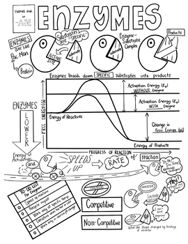 Enzymes Sketch Notes Doodle Notes W/Teacher's Guide and