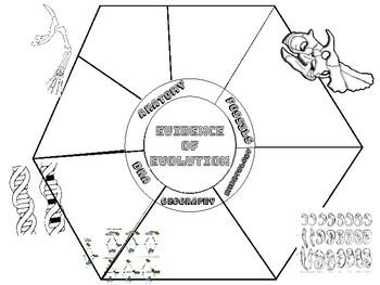 Evidence Of Evolution Bubble Worksheet Answers Key