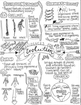 Evidences for Evolution Sketch Doodle Notes by Stacey's