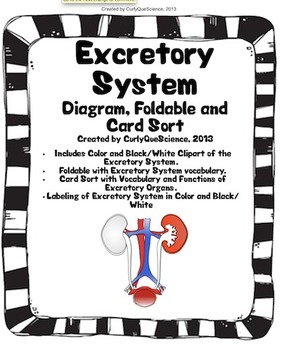 Excretory System Sort, Fold, Diagram and Clipart by Curly
