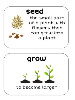 Expeditionary Learning Grade 2 Module 3 Word Wall Cards by