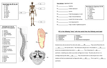 FINAL EXAM: Human Anatomy & Physiology (Fall-1st-Semester