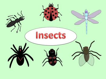 free insect clip art ant ladybug