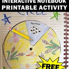 Purchasing Cycle Diagram Gmc Savana Trailer Wiring Free Frog Life Interactive Notebook Craft Activity