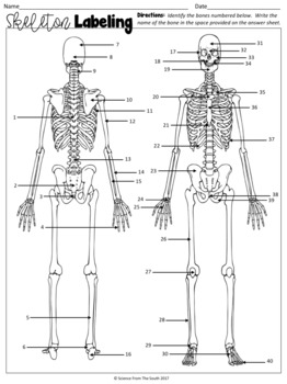 Skeleton Labeling Worksheet for Review or Assessment by