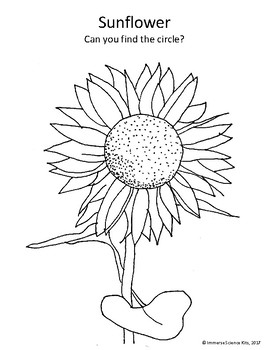 Fall Harvest Coloring pages, Apple, Sunflower, Pumpkin