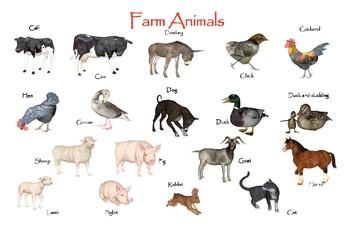 farm animals poster ledger