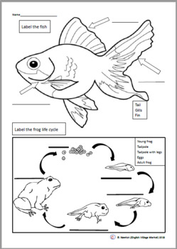 Fish is Fish labeling worksheet by English Village Market