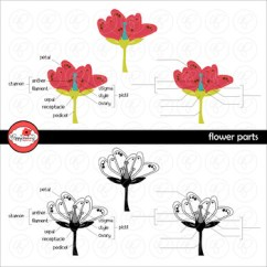 Parts Of A Flowering Plant Diagram Phases The Moon To Label Flower Teaching Resources Teachers Pay Science Clipart By Poppydreamz