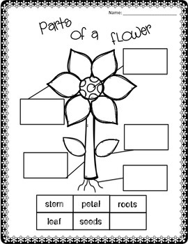 Flower Unit Life Cycle, Math and Literacy Activities by