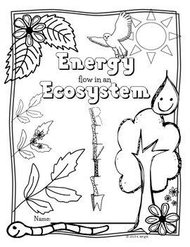 Food Chain, Food Web, Ecosystem Energy Review POSTER