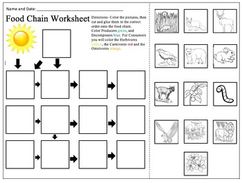Food Chain PowerPoint and Worksheet Bundle by Alexandra